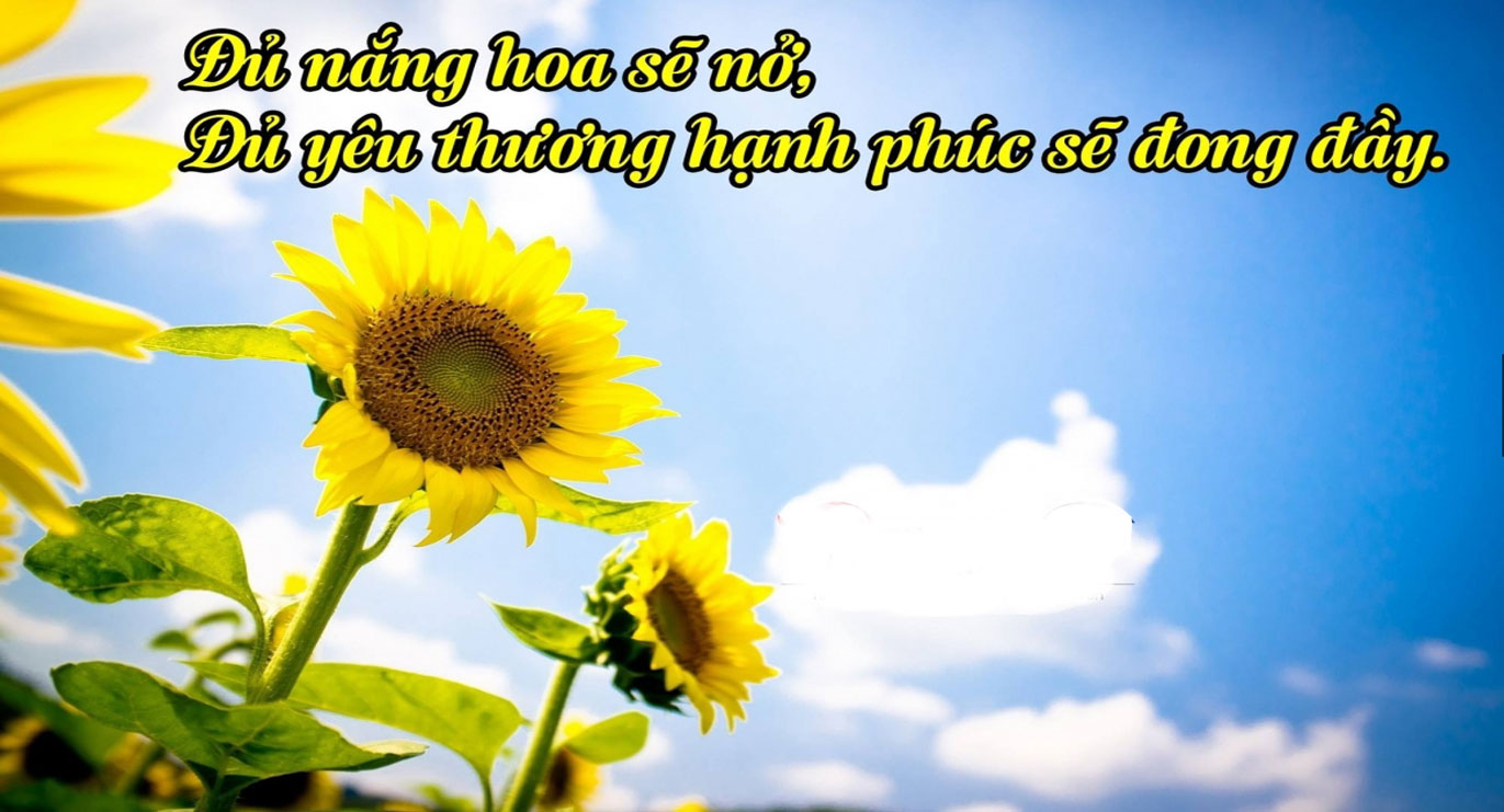 thơ hay cuộc sống