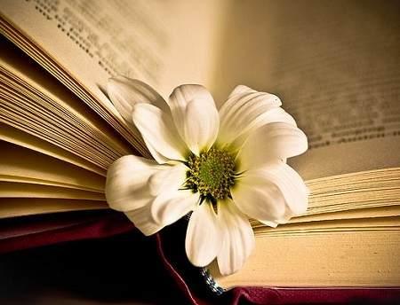 Sách lý luận văn học